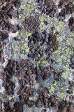 Rock with a black lichen Stock Photos
