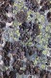 Rock with a black lichen stock photos