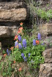 Rock, Blue Bonnets and, Indian Paint Brushes Stock Images