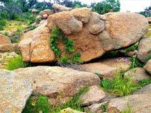 Rock, Boulder, Vegetation, Plant stock image