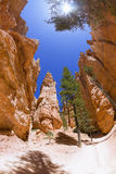 Rock bowl. Fisheye view of rock formations in Bryce Canyon, Utah Stock Images