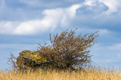 Rock and a bush on a dry field under dramatic cloudy sky Stock Images