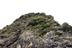 Rock with bush isolated backgrounds Royalty Free Stock Image