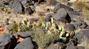 Rock and Cactus Stock Images