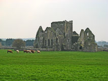 Rock of Cashel 27. The Rock of Cashel monastic ruins in Cashel, County Tipperary, Ireland Stock Photography
