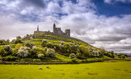 The Rock of Cashel, Ireland. The Rock of Cashel on the hill with sheep grazing on a sunny day in Ireland Stock Photography