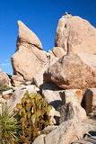 Rock Climb Hidden Valley Joshua Tree National Park Royalty Free Stock Photography