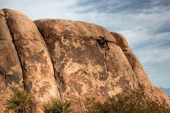 Rock Climbing Joshua Tree National Park Stock Photography