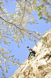 Rock climbing in spring 2 Stock Image