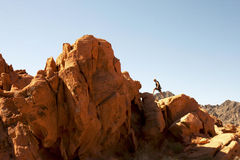 Rock Climbing at Valley of Fire State Park Royalty Free Stock Photos