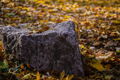 Rock close up with autumn background Stock Photo