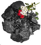 Rock Coal Blackl Red Rose daisies Royalty Free Stock Photo