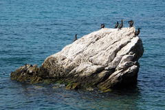 Rock with cormorants birds Royalty Free Stock Images