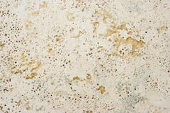 Rock cover with holes texture Stock Image