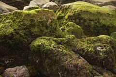Rock covered in green algae Royalty Free Stock Photos