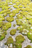 Rock covered in green moss Royalty Free Stock Image