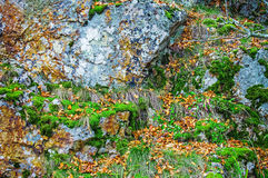 Rock covered with moss and lichen, abstract nature background Royalty Free Stock Photos