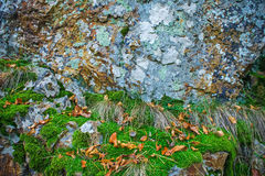 Rock covered with moss and lichen, abstract nature background Royalty Free Stock Images