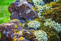 Rock covered with moss and lichen, abstract nature background Royalty Free Stock Photography