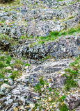 Rock covered with moss and lichen, abstract nature background Stock Photography