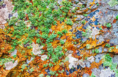 Rock covered with moss and lichen, abstract nature background Stock Photos