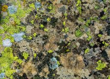 Lichen and moss on rock background Royalty Free Stock Photos