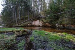 Rock covered river bed in forest with low water level. And tree roots on the ground. shores of sandstone and rocks stock images