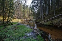 Rock covered river bed in forest with low water level. And tree roots on the ground. shores of sandstone and rocks stock photography