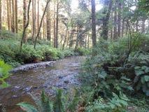 Rock Creek en el camping de Rock Creek cerca de Florencia, Oregon foto de archivo