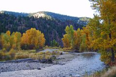 Rock Creek, Montana, cores da queda Foto de Stock