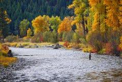 Rock Creek, Montana, cores da queda Pescador da mosca Imagens de Stock