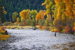 Rock Creek, Montana, Fall Colors. Fly Fisherman. Stock Images