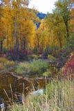 Rock Creek, Montana, Fall Colors. stock photo