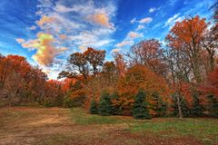 Rock Creek park at the evening Royalty Free Stock Image