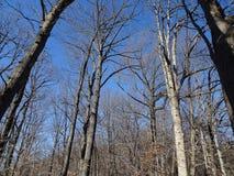 rock creek park zimy Zdjęcie Stock