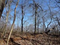 rock creek park zimy Zdjęcie Royalty Free