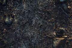 Rock crevice on the ground Royalty Free Stock Photos