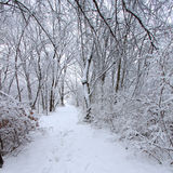 Rock Cut State Park. Fresh snowfall along a hiking trail in northern Illinois Royalty Free Stock Image