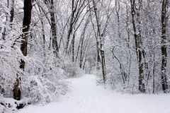 Rock Cut State Park. Fresh snowfall along a hiking trail in northern Illinois Royalty Free Stock Photography