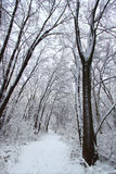 Rock Cut State Park. Fresh snowfall along a hiking trail in northern Illinois Royalty Free Stock Photos