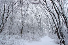 Rock Cut State Park - Illinois. Fresh snowfall along a hiking trail in northern Illinois Royalty Free Stock Photography