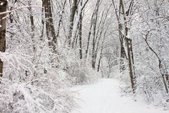Rock Cut State Park - Illinois. Fresh snowfall along a hiking trail in northern Illinois stock image