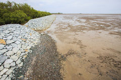 Rock dam protection sea mangrove form natural sea storm damage f Royalty Free Stock Images