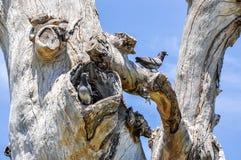 Rock Doves: Australian Wildlife Stock Photo