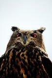 Rock Eagle-Owl Stock Photo