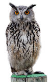 Rock Eagle-Owl Stock Photos