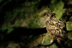 Rock Eagle Owl on green Royalty Free Stock Photos
