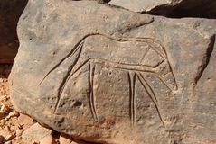 Rock engraving, Libya Royalty Free Stock Photos
