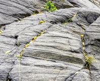 Rock. A Fern Growing from rock Stock Images