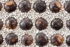 Rock floor and coconut shell Stock Photos